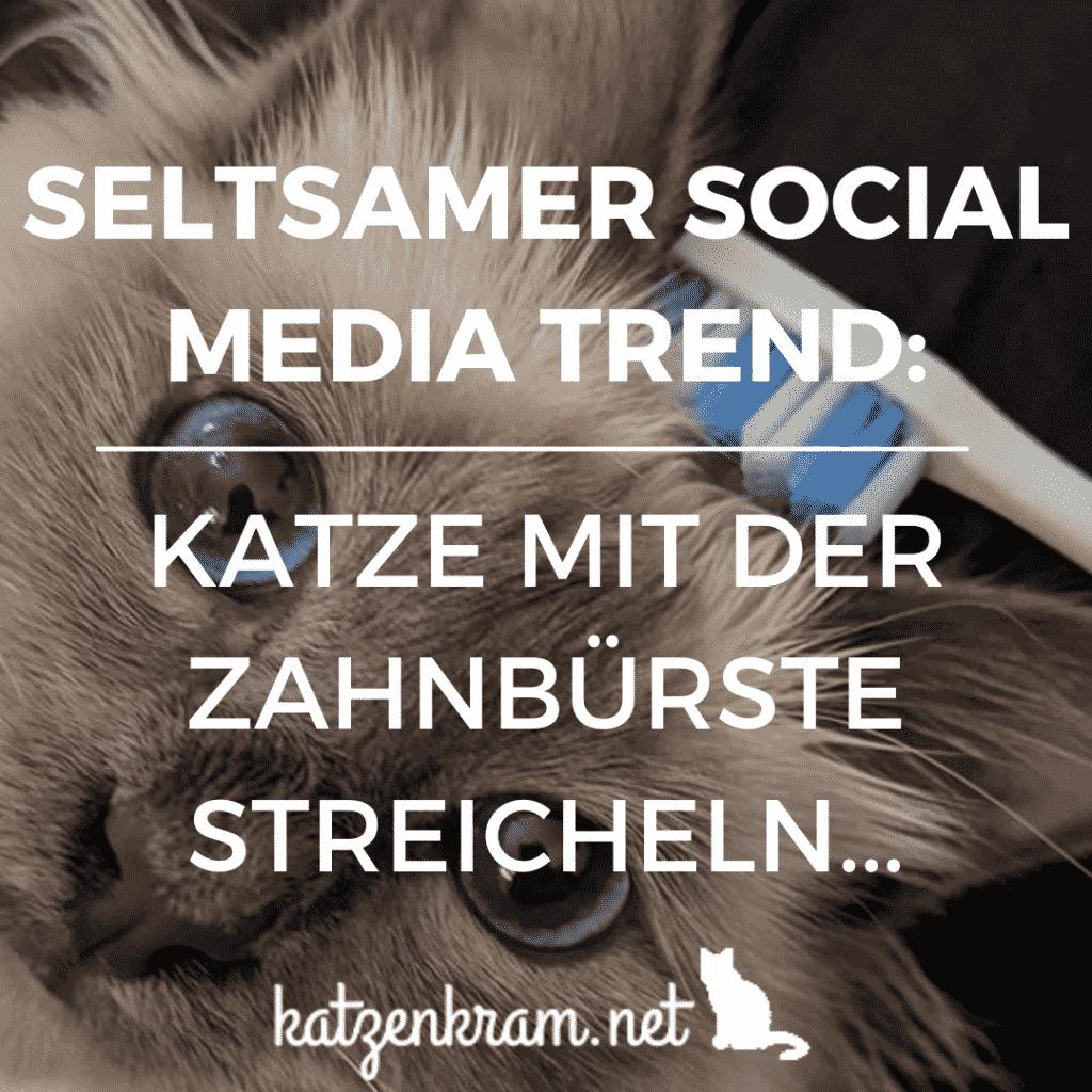 Seltsamer Social Media Trend - Katze mit Zahnbürste streicheln