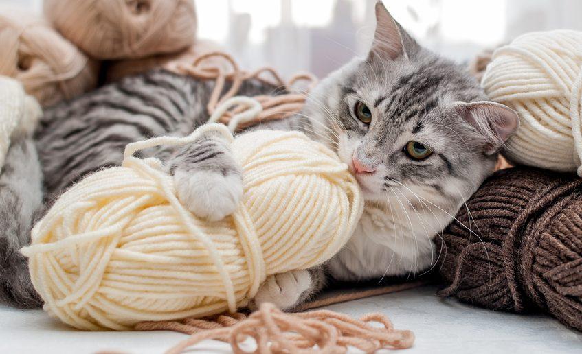 14 Gefahren für Katzen