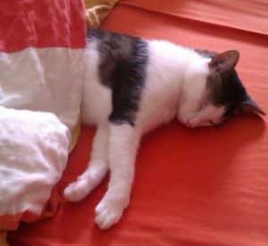 kann man eine katze berhaupt erziehen katzenkram. Black Bedroom Furniture Sets. Home Design Ideas