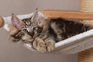 Wohnungskatzen 10 Tipps Für Eine Katzengerechte Wohnung Katzenkram