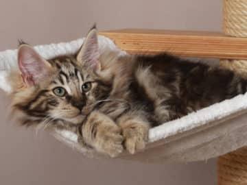 Spielzeug, Kratzbaum und Co. - Das gehört zur katzengerechten Wohnung