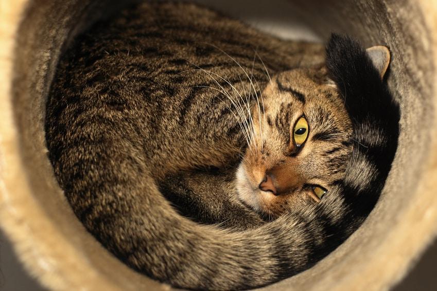 Katzenhaltung in der Wohnung - Rückzugsmöglichkeiten