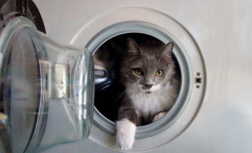 Gefahrenquellen für Katzen: Waschmaschine und Trockner