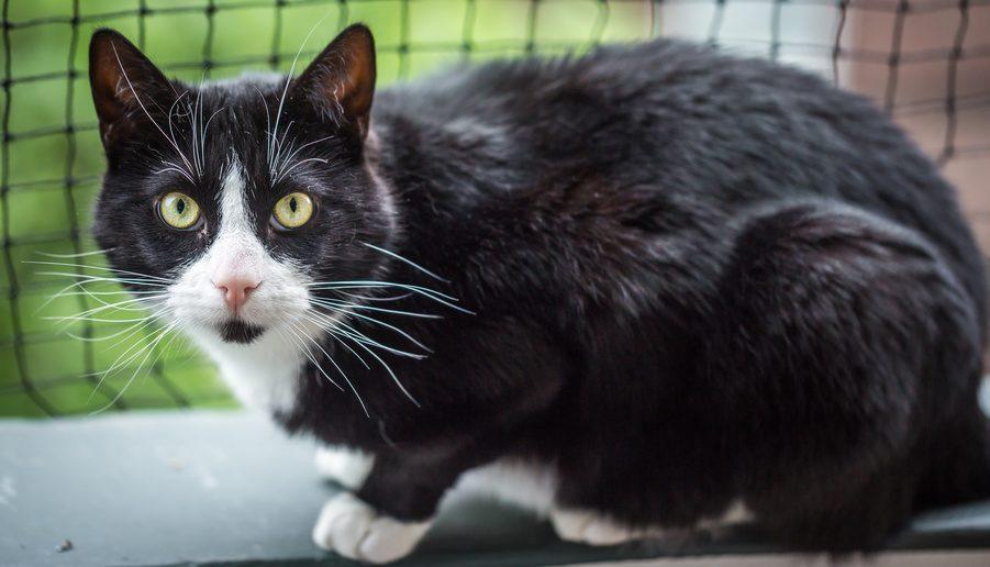 Katzen Balkon-Schutz-Netz