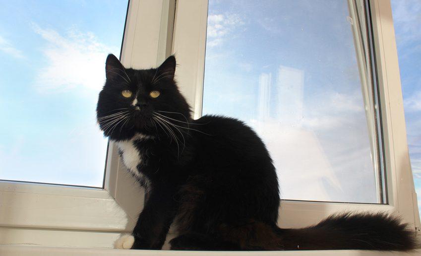Katzen: Gefahr durch Kippfenster