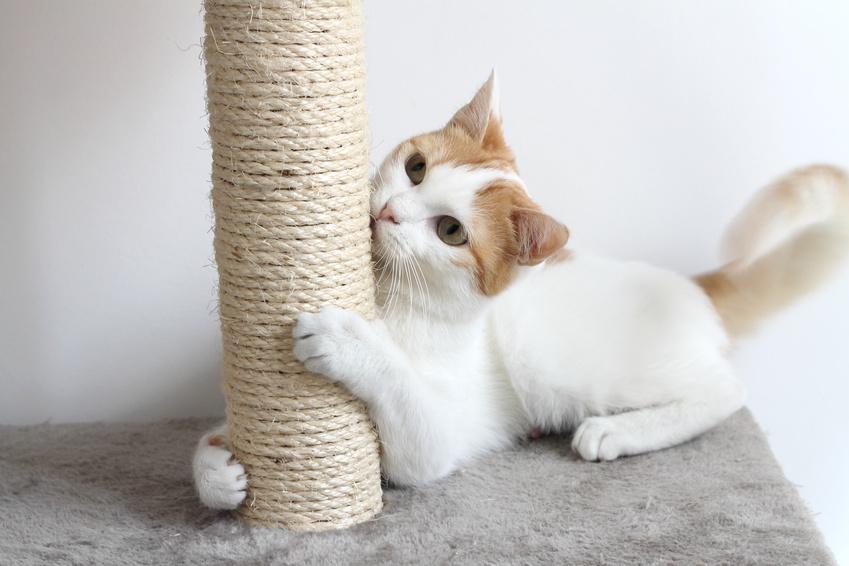 Kratzmöglichkeiten: Kratzbaum, Kratzbrett für Katzen