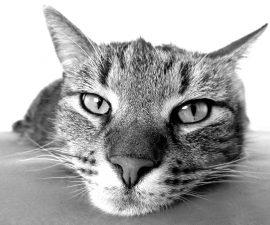 10 tipps zur unsauberkeit bei katzen das kannst du machen wenn deine katze berall hinpinkelt - Katzenklo im garten was tun ...