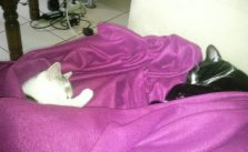 Zwei Katzen sind besser als eine