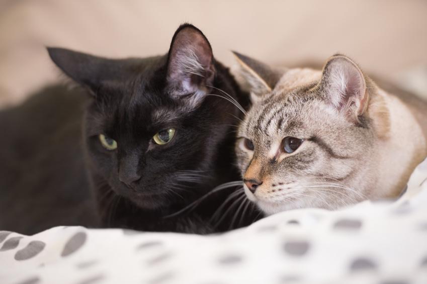 Bild: Zwei Katzen schmusen - Immer mindesten 2 Katzen halten