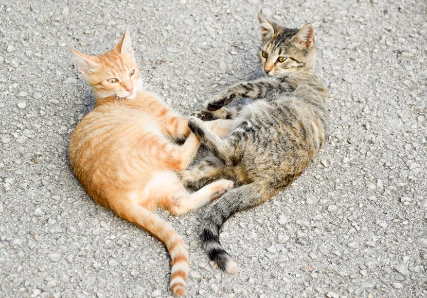 Bild: Katzen mit Freigang - keine Einzelgänger