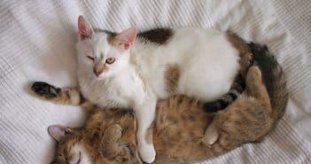 Bild: Zwei Katzen oder eine? Bitte keine Katzen Einzelhaltung!