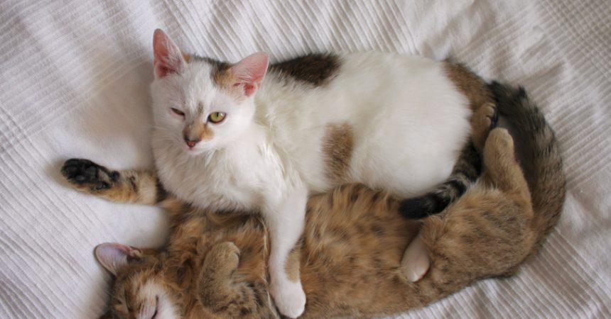 eine oder 2 katzen gute gr nde gegen einzelhaltung von katzen. Black Bedroom Furniture Sets. Home Design Ideas