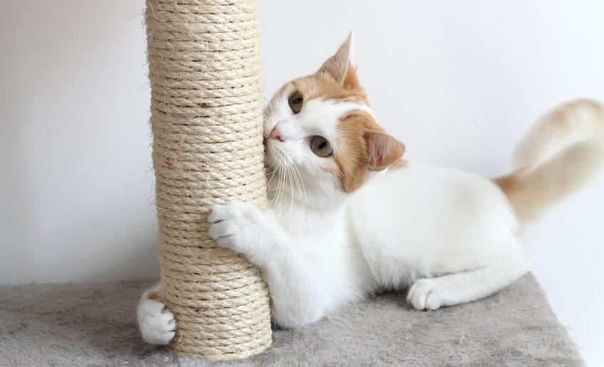"""So ist es besser: Katzen brauchen genügend """"legale"""" Kratzmöglichkeiten: Kratzbäume und Kratzbretter."""