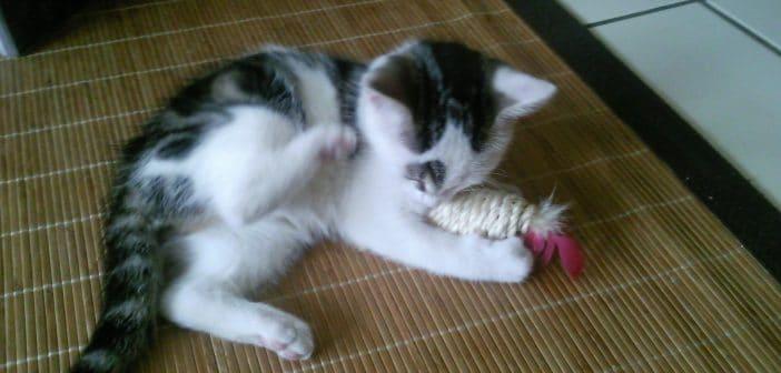 Grundausstattung für eine Katze