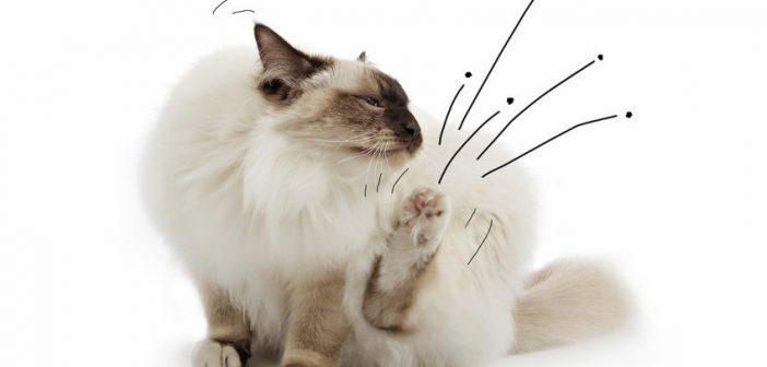 Favorit Katze hat Flöhe? Katzenflöhe bekämpfen + aus der Wohnung bekommen NT78