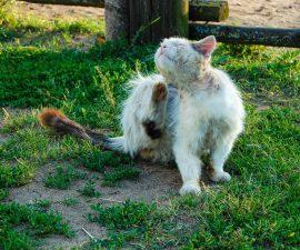 Mittel gegen Flöhe bei der Katze
