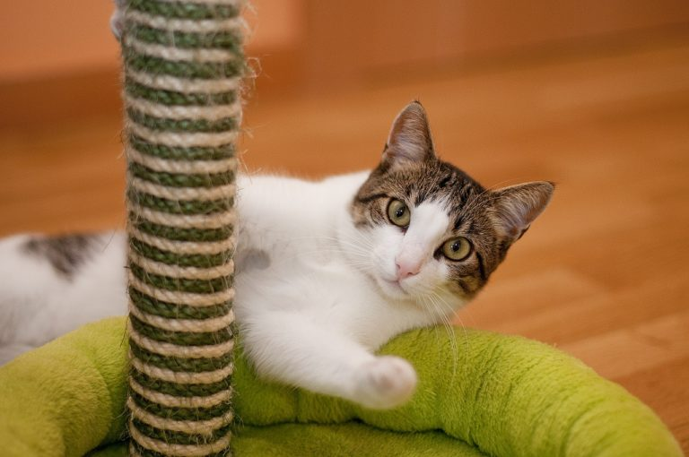 Kratzbaum Katze