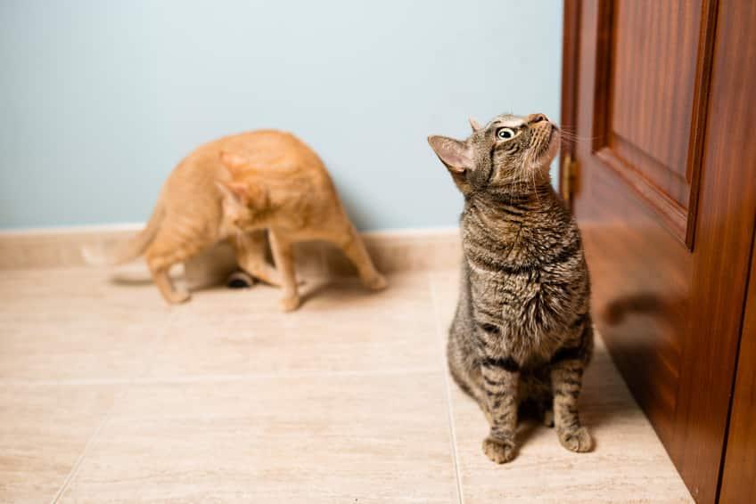 Katzen zusammenführen - Gerüche