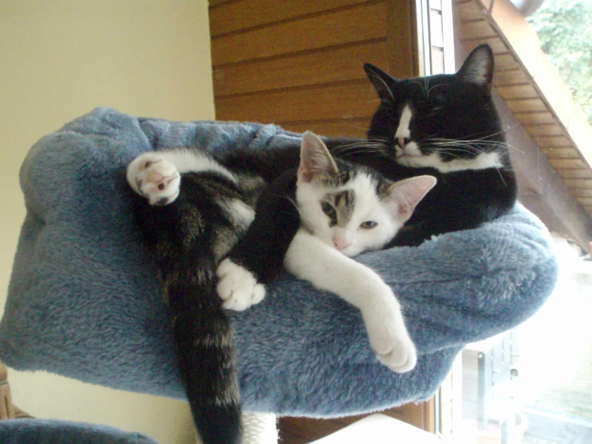katze und hund zusammen halten