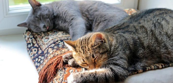 Katzen aneinander gewöhnen – So klappt die Katzen-Zusammenführung (in 5 Schritten)