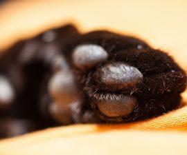 so kannst du deine katze vor zecken sch tzen katzenkram. Black Bedroom Furniture Sets. Home Design Ideas