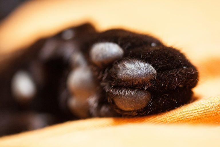 Pflege für Katzen-Pfoten