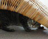 10 Tipps gegen Unsauberkeit bei Katzen – Das kannst du machen, wenn deine Katze überall hinpinkelt