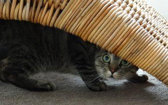 10 Tipps gegen Unsauberkeit bei Katzen