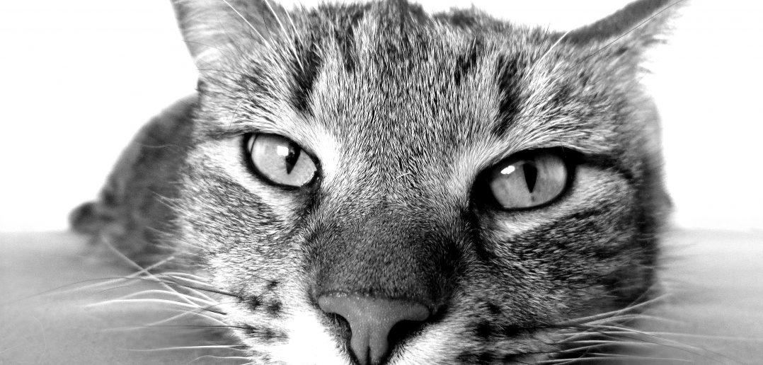 Stress als Auslöser für Unsauberkeit bei Katzen