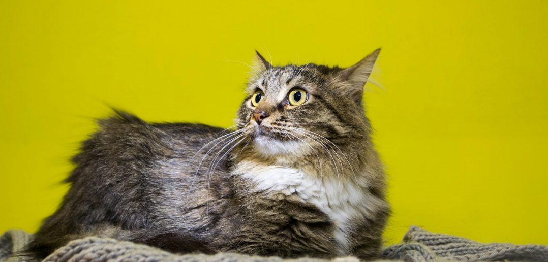 Katze Stress unsauber