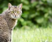 Katzen Ortung: Peilsender und GPS für Katzen im Vergleich