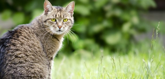 Katzen GPS Sender + Peilsender