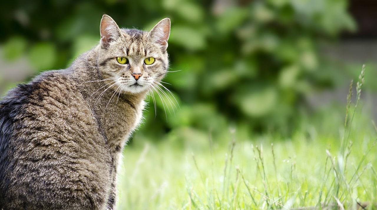Gps Für Katzen Freigänger
