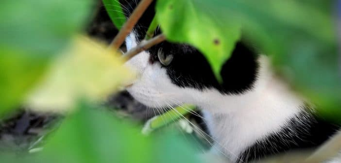 Katze entlaufen / vermisst