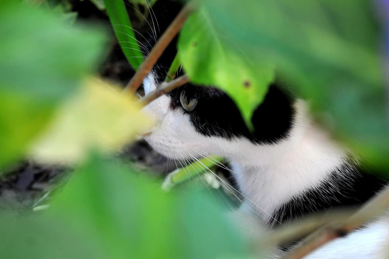 Attractive Katze Nähmustern Ornament - Decke Stricken Muster ...