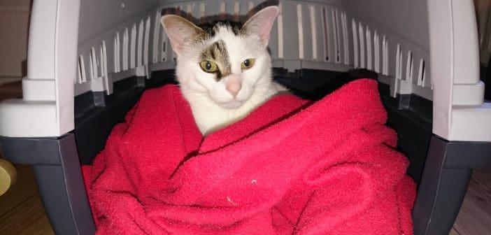 Katze in Transportbox ohne Stress