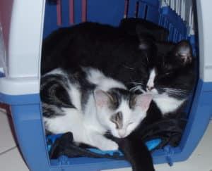 Katzen an die Transportbox gewöhnen