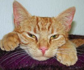 5 tipps neue katze zieht ein katzen erfolgreich aneinander gew hnen. Black Bedroom Furniture Sets. Home Design Ideas