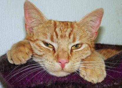 Katzenhaare entfernen