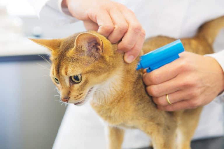 Katzen Chippen / Mikrochip