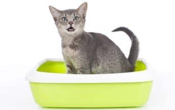 Katzenklo Tipps