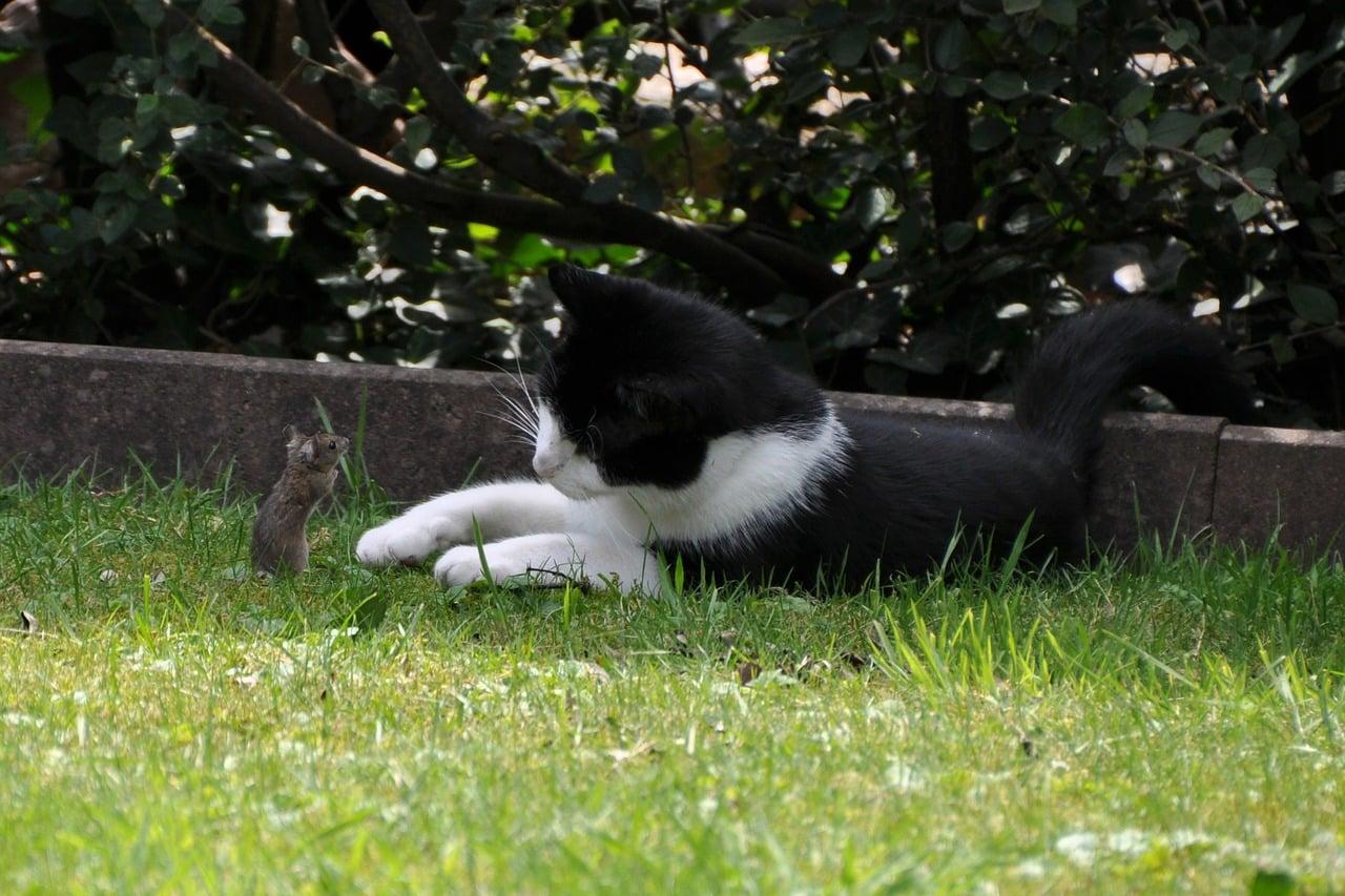 erbrechen bei katzen wann zum tierarzt wenn die katze erbricht. Black Bedroom Furniture Sets. Home Design Ideas