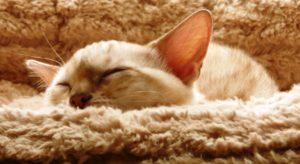 Katze Fieber Messen