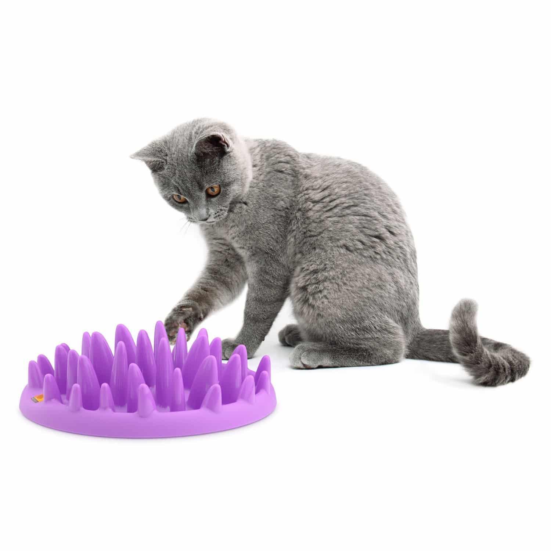 Anti-Schling Napf für Katzen