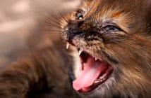 Katze beißt und haut / Aggressivität bei der Katze