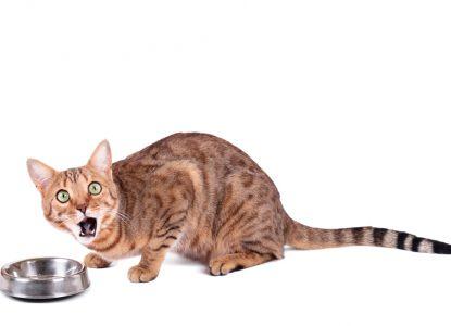 Katze schlingt