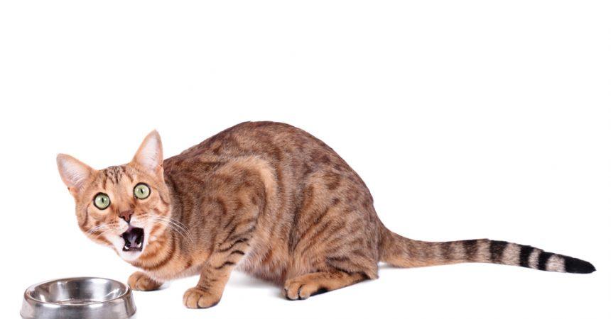 deine katze schlingt 5 tipps gegen hastiges fressen. Black Bedroom Furniture Sets. Home Design Ideas