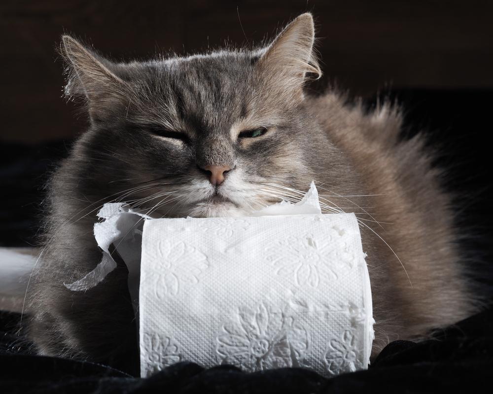 hat deine katze durchfall erste hilfe gegen durchfall bei katzen. Black Bedroom Furniture Sets. Home Design Ideas