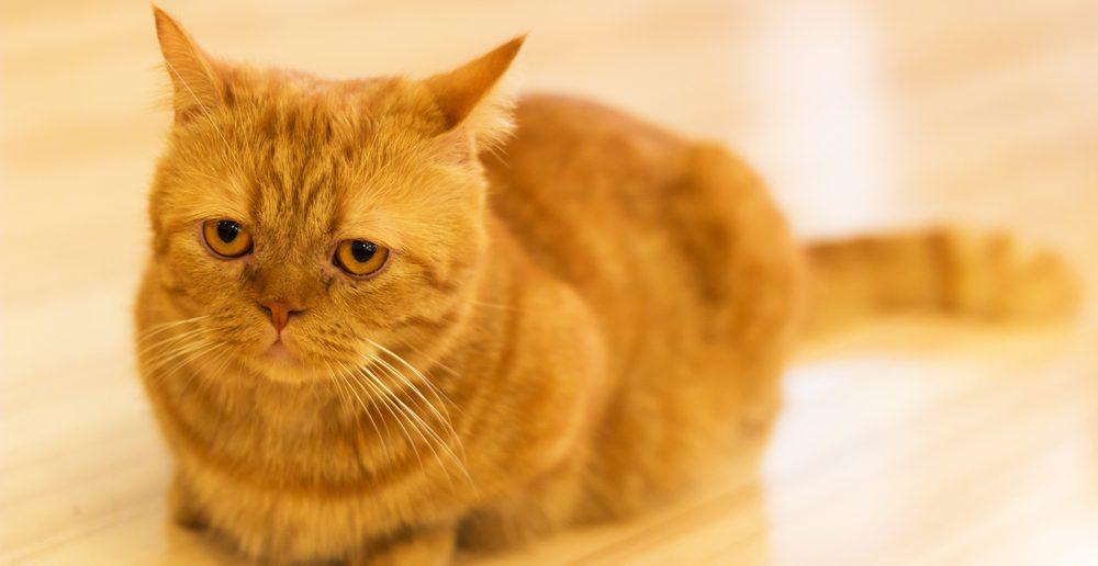 Katze Trauer Bachblüten-Therapie
