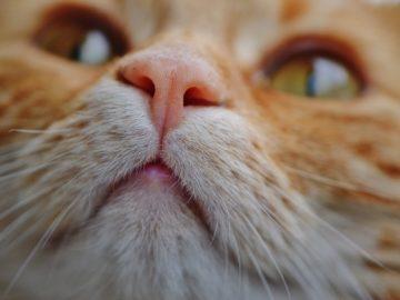 Katzen Bachblüten